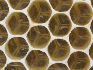 l'abeille architecte de sa maison