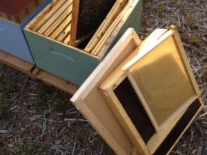 Choix du type de ruche