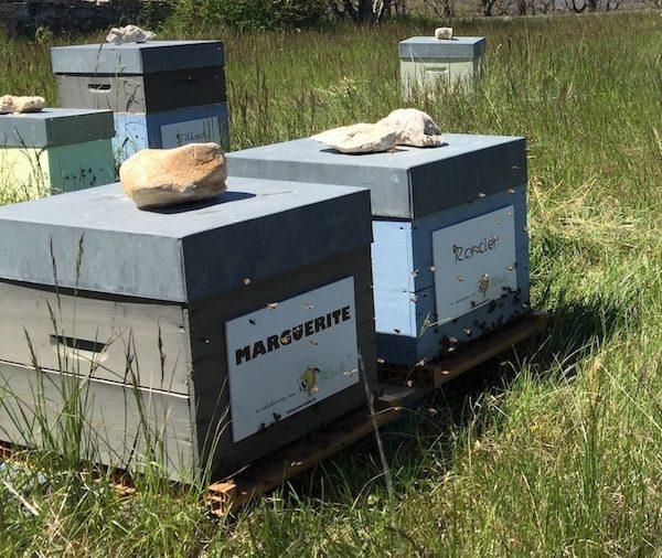 Forte activite devant la ruche