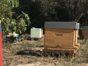 Essaims et ruches